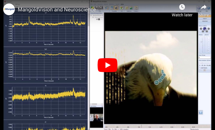 MangoldVision and Neuroscience – Combining Eye Tracking and Brain Research